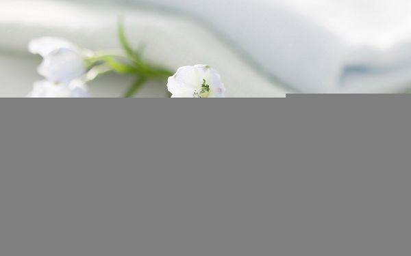 click to free download the wallpaper--Flowers Art Image, Interior Flowers, White Towel, Sweet Scene