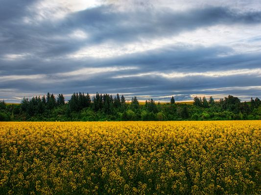 click to free download the wallpaper--Flowers Field Image, Yellow Flowers in Bloom, Under the Blue Sky