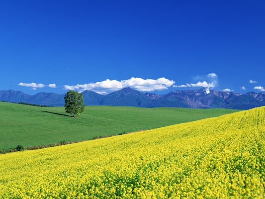 click to free download the wallpaper--Flowers Field Picture, Endless Flower Sea, Under the Blue Sky