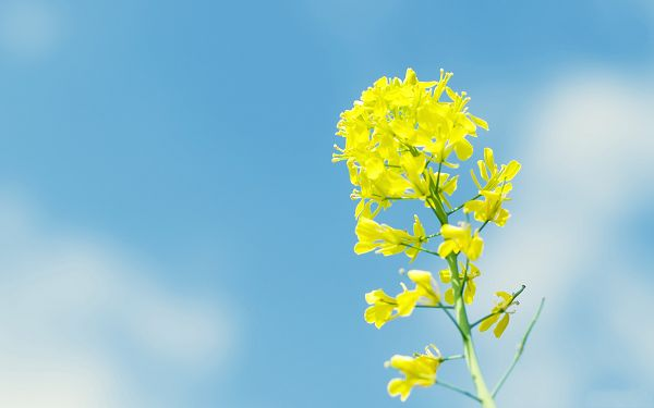click to free download the wallpaper--Flowers Image, Yellow Flower in the Blue Sky, Smile in Bloom