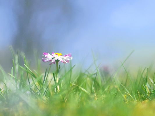 click to free download the wallpaper--Flowers Meadow Picture, Pink Blooming Flower Among Green Grass