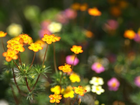 click to free download the wallpaper--Flowers Photo, Colorful Little Flowers, Be Optimistic Like Them