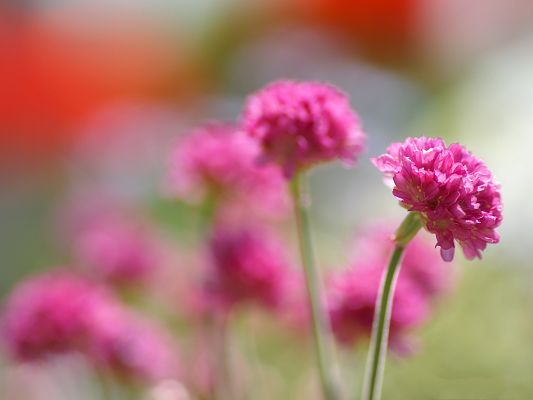 click to free download the wallpaper--Flowers Photograpy, Pink Flowers Under Digital Camera, Fresh New Scene