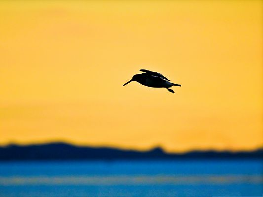 click to free download the wallpaper--Flying Bird Photography, If Only I Were a Bird...