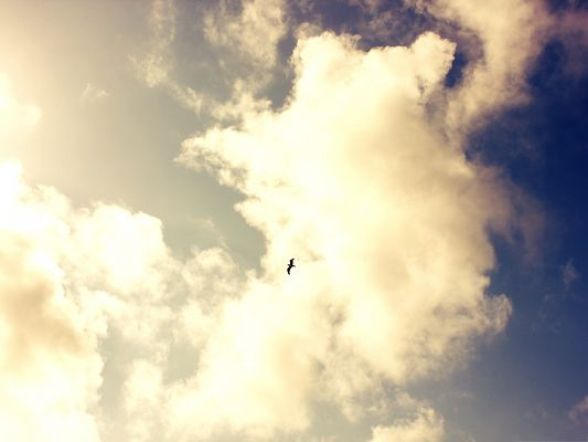 Flying Bird Photography, a Little Flying Bird in the Endless Blue Sky
