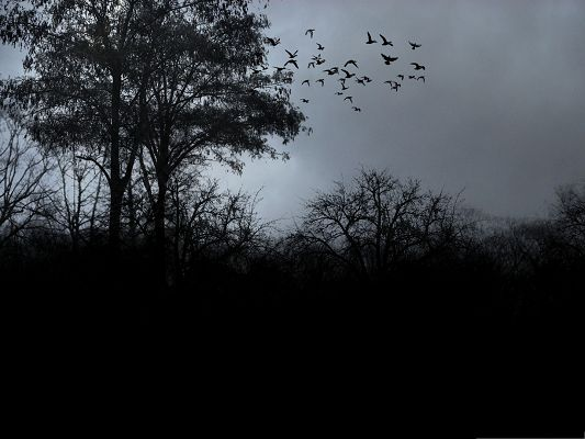 click to free download the wallpaper--Flying Birds Image, a Group of Birds Heading for Home, Dusk Scene