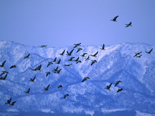 click to free download the wallpaper--Flying Birds Photo, a Group of Birds 0ver the Mountain, Enjoy the Fly!