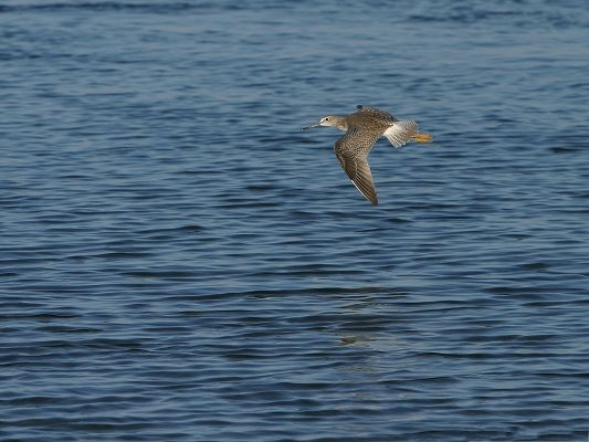click to free download the wallpaper--Flying Birds Photography, Big Bird Flying Over the Sea, Be Persistent, a Long Way