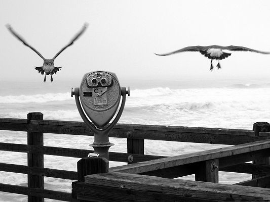 click to free download the wallpaper--Flying Birds Photography, Two Birds by the Pier, Sing the Magnificent Sea