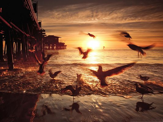 click to free download the wallpaper--Flying Birds and Nature, a Group of Birds Flying Toward the Sea, Catch the Fish?