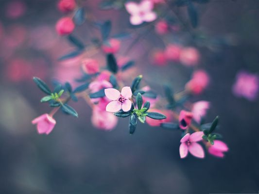 click to free download the wallpaper--Four Petals Flower, Pink Flower in Bloom, Green Little Leaves