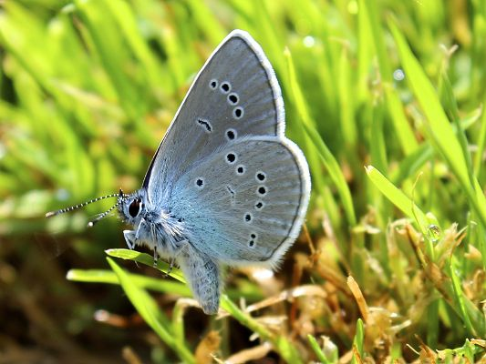 click to free download the wallpaper--Free Animals Wallpaper, Butterfly in Diamonds, Looking Great in Nature Landscape