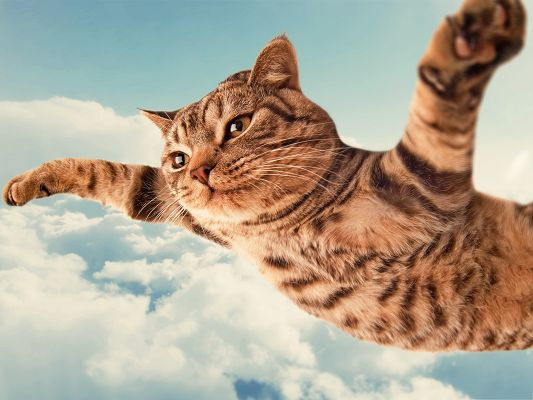 click to free download the wallpaper--Free Animals Wallpaper, Cat in the Sky, I Belive I Can Fly