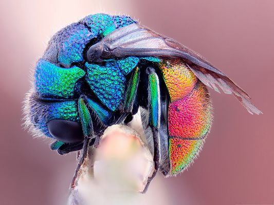 click to free download the wallpaper--Free Animals Wallpaper, Colorful Fly on Branch, Falling Asleep