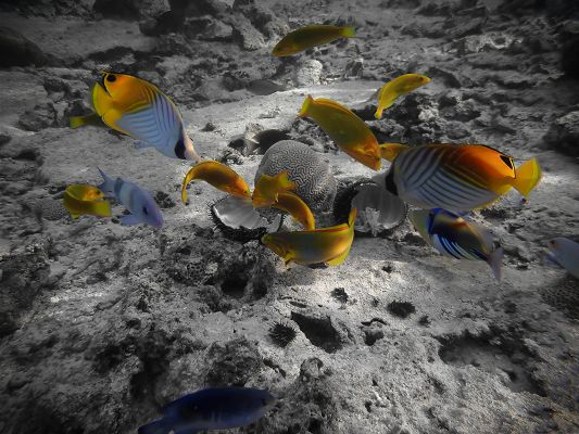 Free Animals Wallpaper, Rarotonga Underwater, Go Wherever You Want