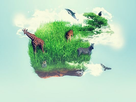 click to free download the wallpaper--Free Animals Wallpaper, Various Animals on the Planet, Wild Life in Harmony