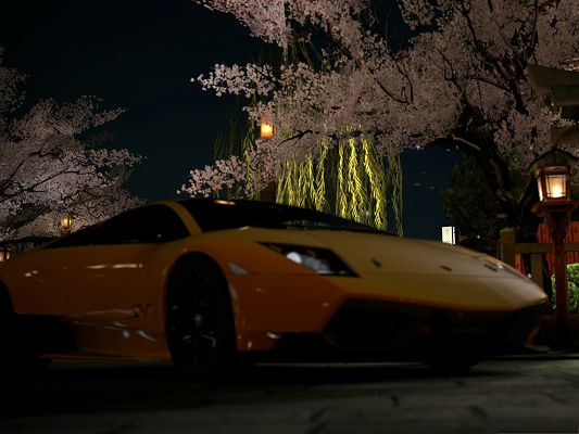 click to free download the wallpaper--Free Car Wallpapers, Yellow Lamborghini Murcielago Under Blooming Flowers