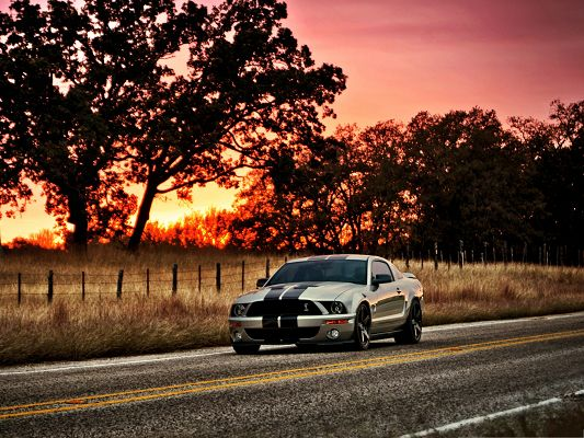 Free Cars Wallpaper, Ford Shelby in the Pink Sky, Amazing Scenery