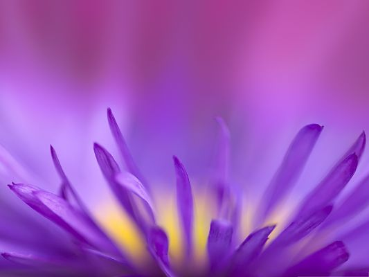 Free Computer Background, Delicate Purple Petals, Nice and Incredible Look