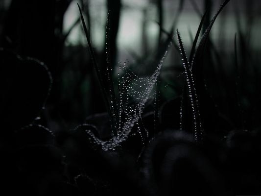 Free Computer Background, Dew On Spider Web, Dark Scene