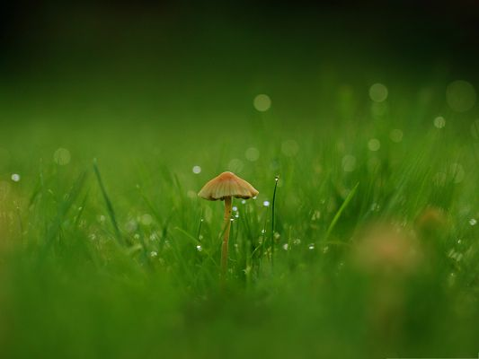click to free download the wallpaper--Free Computer Background, Mushroom in Green Field, the Power of Life