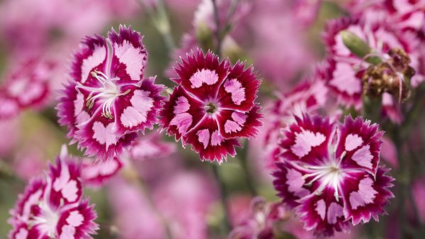 Free Download Cute Animals Picture - Pink Blooming Flowers and Green Leaves, They Are Small Yet Attractive