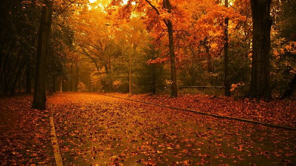 Free Download Natural Scenery Picture - A Full Eye of Fallen Red Leaves, a Strong Wind or Heavy Rain is Gone