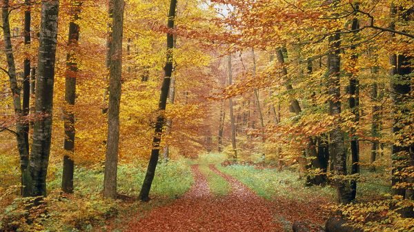 Free Download Natural Scenery Picture - A Narrow Road, Full of Fallen Leaves, Great Scene in the Forest