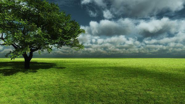 click to free download the wallpaper--Free Download Natural Scenery Picture - A Tall Green Tree on Green Grass, the Blue and Cloudy Sky, Looking Great Together