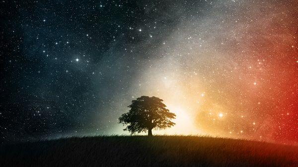 Free Download Natural Scenery Picture - A Tall Tree Under the Moonlight, Shinning Stars, Looking Great
