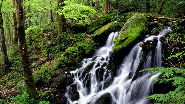 click to free download the wallpaper--Free Download Natural Scenery Picture - A Waterfall in Rapid Flow, Green Plants Alongside, Combine Quite a Scene