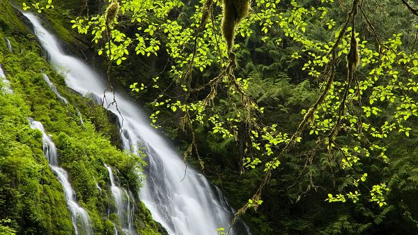 Free Download Natural Scenery Picture - A White and Long Waterfall, Green Plants Trying to Reach It, Great in Look