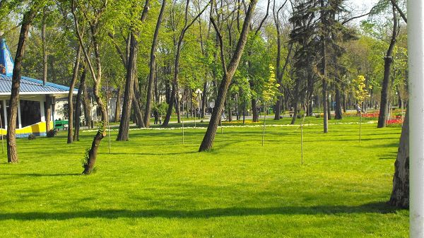 Free Download Natural Scenery Picture - Tall Trees Living in Green Grass, a White House at the End, a Clean and Comfortable Place
