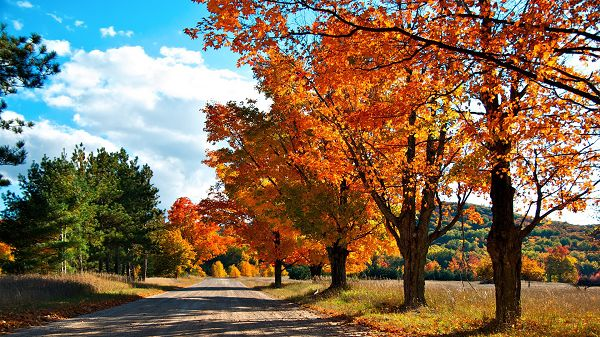 click to free download the wallpaper--Free Download Natural Scenery Picture - Tall Trees with Red Leaves, the Blue Sky, Shades All Over the Road