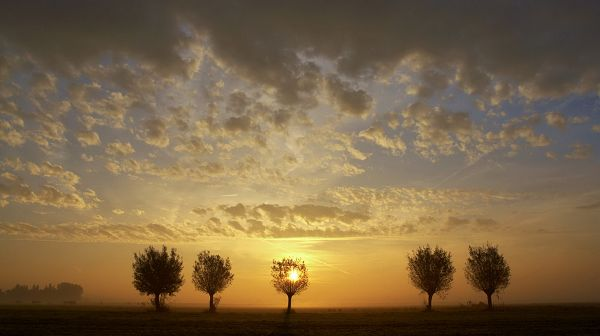 Free Download Natural Scenery Picture - The Rising Sun, Clouds Will Soon be Gone, One Tree is Seemingly on Fire