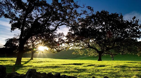 click to free download the wallpaper--Free Download Natural Scenery Picture - The Rising Sun Generating Light on Tall Trees and Green Grass, It is Generous