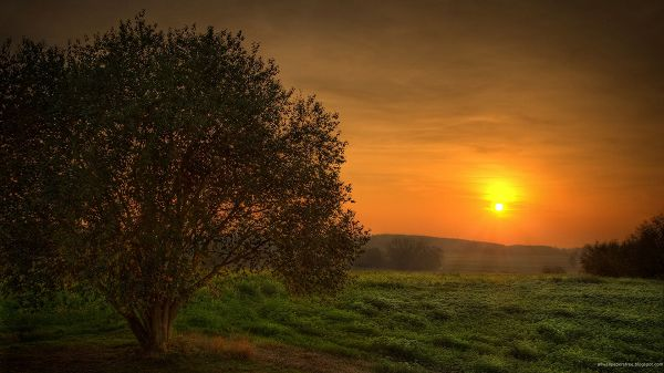 Free Download Natural Scenery Picture - The Rising Sun, Things Are Added Golden Light, Green Grass and Prosperous Scene