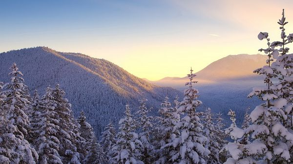 click to free download the wallpaper--Free Download Natural Scenery Picture - The Snow-Capped Trees and Mountains, What a White and Pure World!