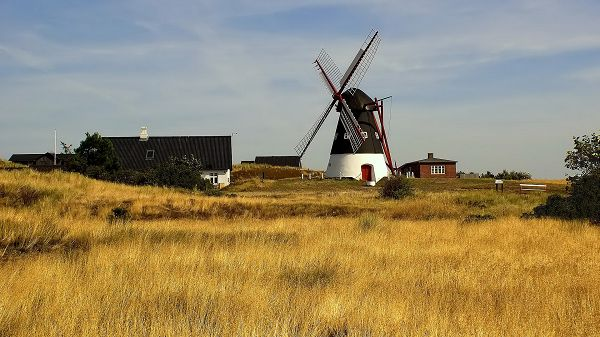 Free Download Natural Scenery Picture - Windmills and Houses Among the Golden Plants, the Blue Sky