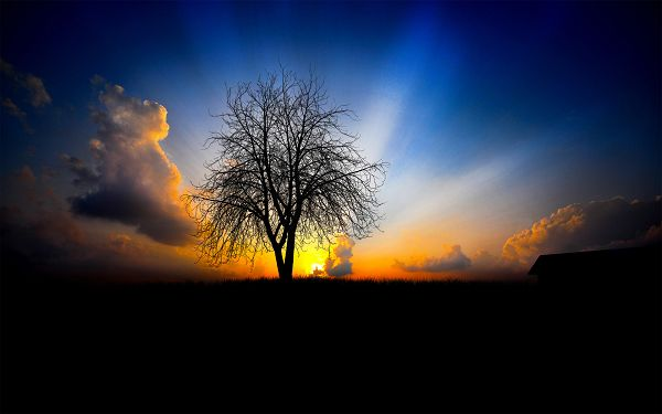 Free Download Natural Scenery Wallpaper of The Next Morning, the Rising Sun, a Tall Tree in Prosperous Growth, They Fit Each Other