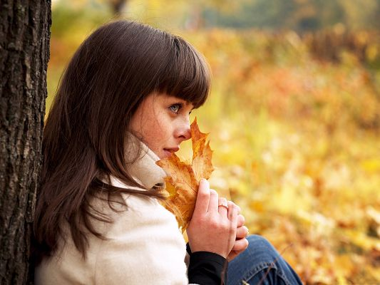 click to free download the wallpaper--Free Girls Wallpaper, Beautiful Girl Embraced by Autumn Scene, a Full Ground of Yellow Leaves