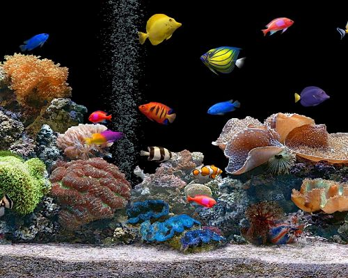 Free Images of Underwater World, Colorful Fishes Among Various Sea Plants, a Clean World!