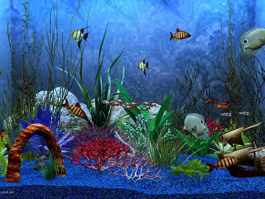 click to free download the wallpaper--Free Pics of Underwater World, Fishes Swimming Through Various Sea Plants, Blue Bubbles