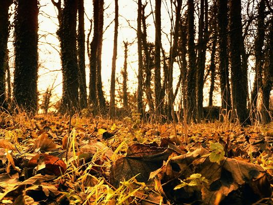 Free Posts of Natural Scene, a Pile of Yellow Leaves, Tall Trees, Sunshine Around