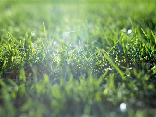 click to free download the wallpaper--Free Wallpaper Background, Grass Field, Warm Sunlight is Pouring