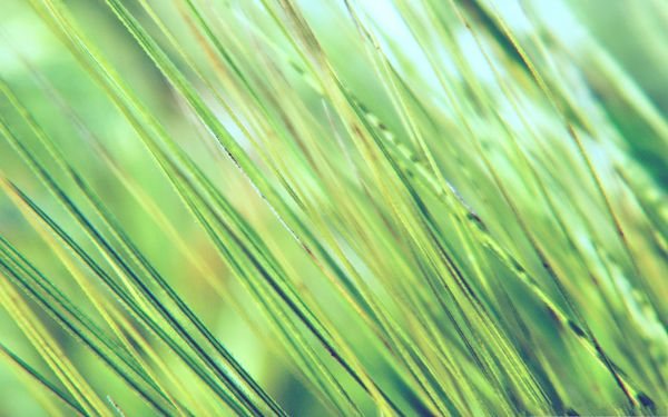 click to free download the wallpaper--Free Wallpaper Background, Green Grass in Macro Focus, Incredible Look