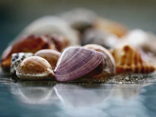 click to free download the wallpaper--Free Wallpaper Background, Shells Under Macro Focus, Wind from the Sea