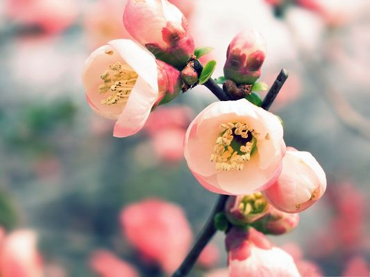 click to free download the wallpaper--Free Wallpaper Background, Tiny Pink Flowers Smiling, Let's Welcome Spring!
