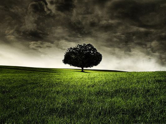 click to free download the wallpaper--Free Wallpaper Background, a Tall Tree Standing Under the Dark Sky