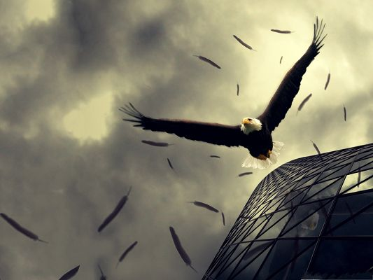 click to free download the wallpaper--Free Wallpaper Backgrounds, Bald Eagle Flying, Fallen Feathers